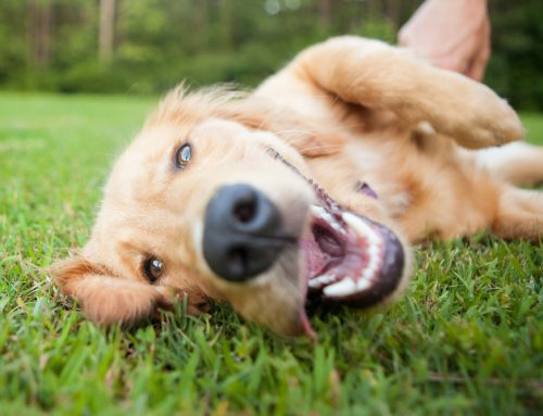 Take These 6 Steps to Protect Your Pet From Parasites