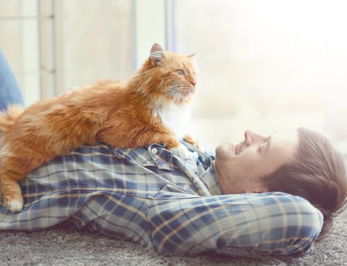 5 Ways Responsible Pet Ownership Can Reduce Veterinary Costs