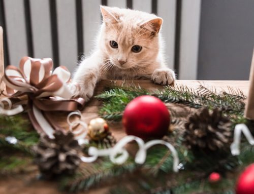 The Ultimate Guide to the Greatest Holiday Gifts for Pets