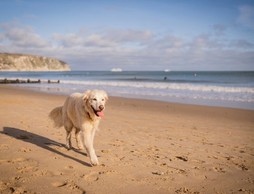 6 Tips to Safely Have Fun in the Sun With Your Dog